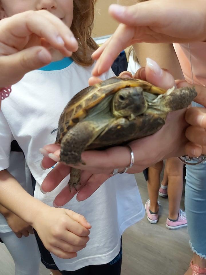 As tartarugas também vivem na terra!